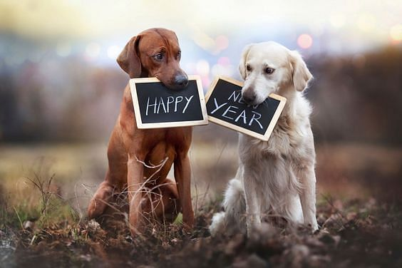 Wish your loved ones Happy New Year with these memorable quotes and images on WhatsApp, Facebook, Instagram
