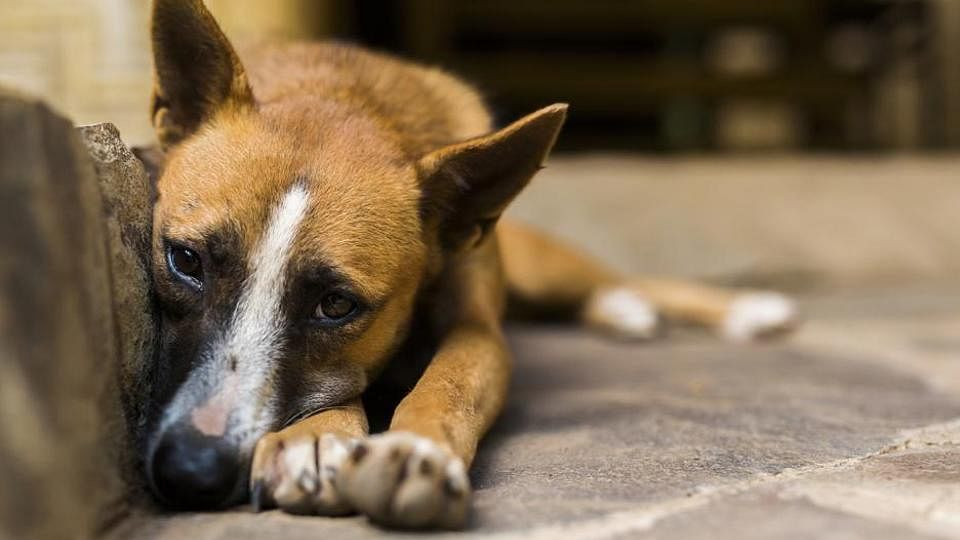 Panic in Bengal town after 200 stray dogs found dead over 3 days