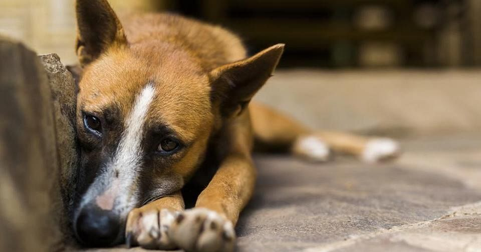 Humanity Shamed: Female Dog Sexually Assaulted by 40-Year