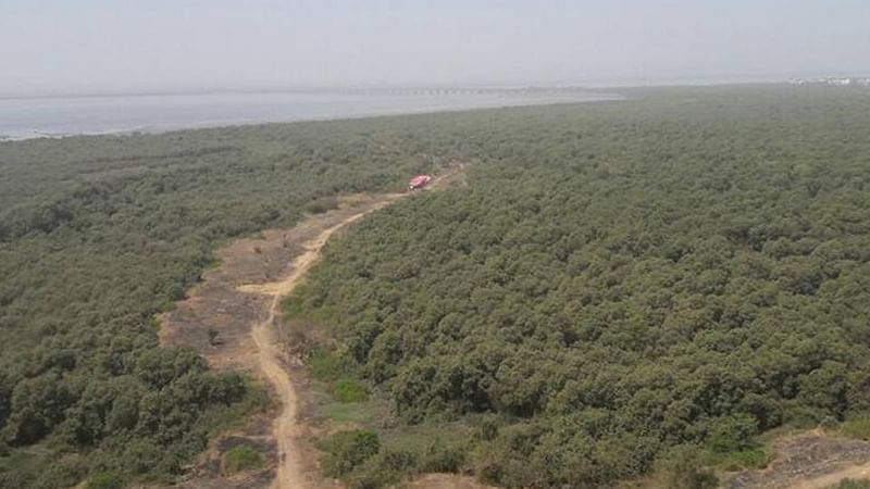 Mumbai: 55 mangrove destruction cases waived
