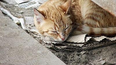 BMC to sterilise homeless cats starting from January