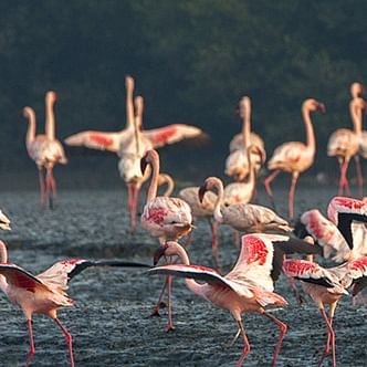2% project cost as damages; But will flamingos agree to it and stay put?