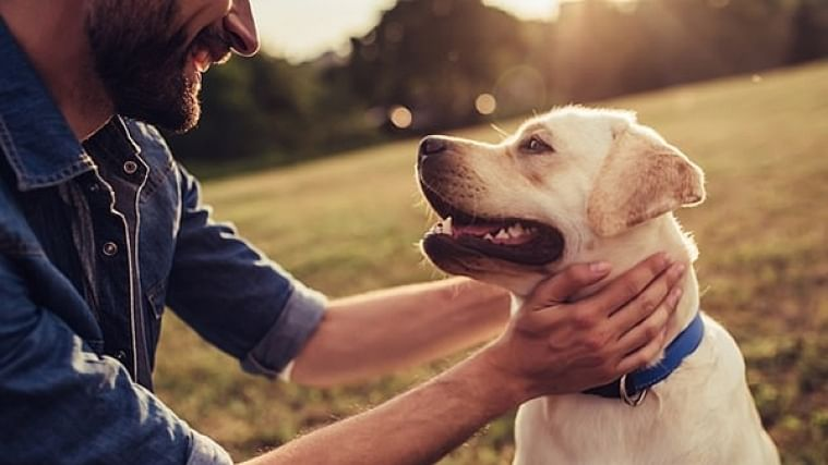 Indore's Pet Style: Canines that entered our hearts