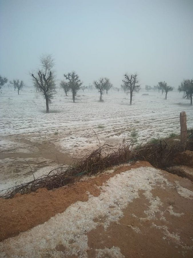 'Snowfall' in Rajasthan has netizens rejoicing on social media and farmers worried about their crops