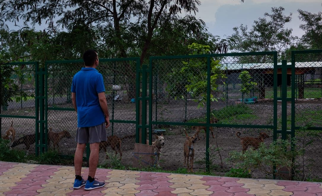 IIM Indore director Himanshu Rai saying hello to the dogs in shelter