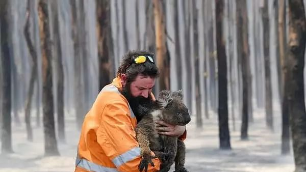 Australia may list Koalas as 'endangered' after population suffers 'extraordinary hit' in bushfire