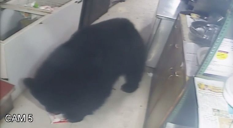 Got milk? Watch CCTV footage of chilled bear breaking in and drinking in Mount Abu