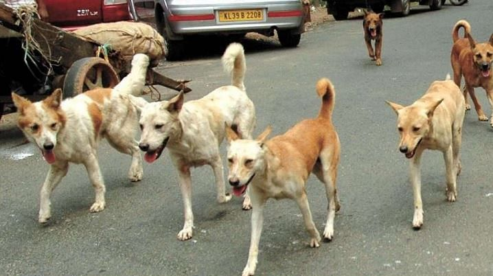 Newborn dragged out of OT, killed by stray dogs in Farrukhabad