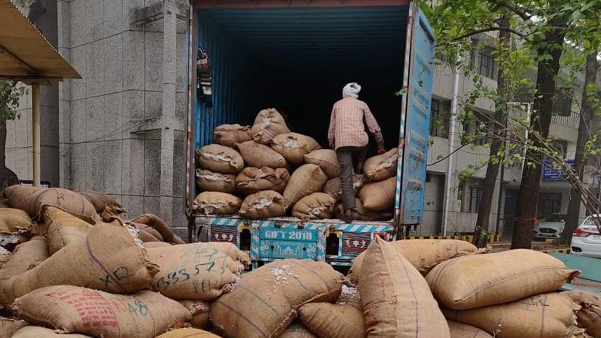 Indore: DRI seizes 200 quintal ganja worth Rs 30 lakh