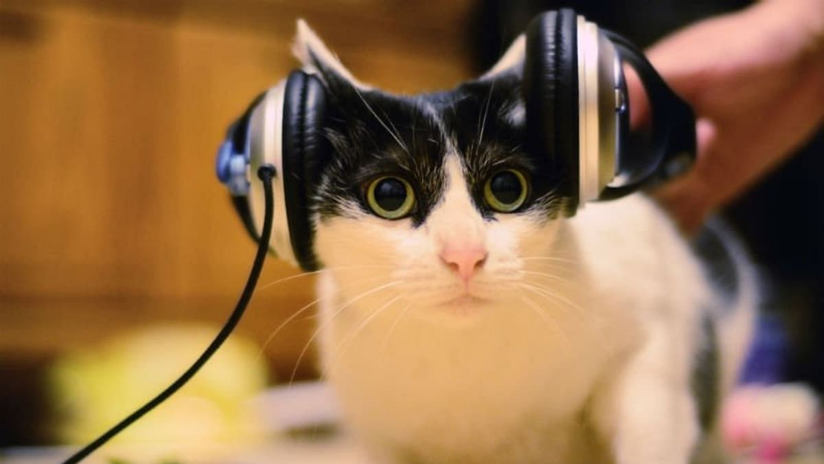 "Playing ""cat-specific music"" may reduce feline's stress during vet visits"