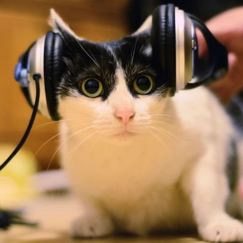 """Playing """"cat-specific music"""" may reduce feline's stress during vet visits"""