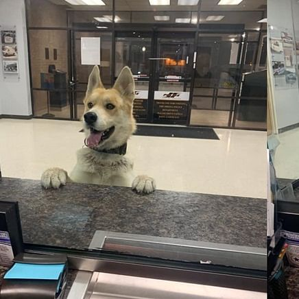 'Cuteness overloaded': Dog goes viral after showing up at police station to 'apply for K-9 position'