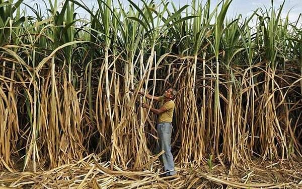 Maharashtra govt assures loan interest of two sugar mills