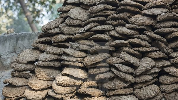 Over 100 kgs cow dung stolen in Chhattisgarh, a month after 'Godhan Nyay Yojana' scheme
