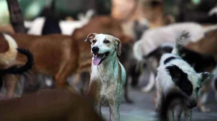 Bhopal: Dogs devil denizens, civic body clueless