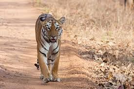 Maharashtra's Tadoba Andhari Tiger Reserve is showing the way with eco-tourism