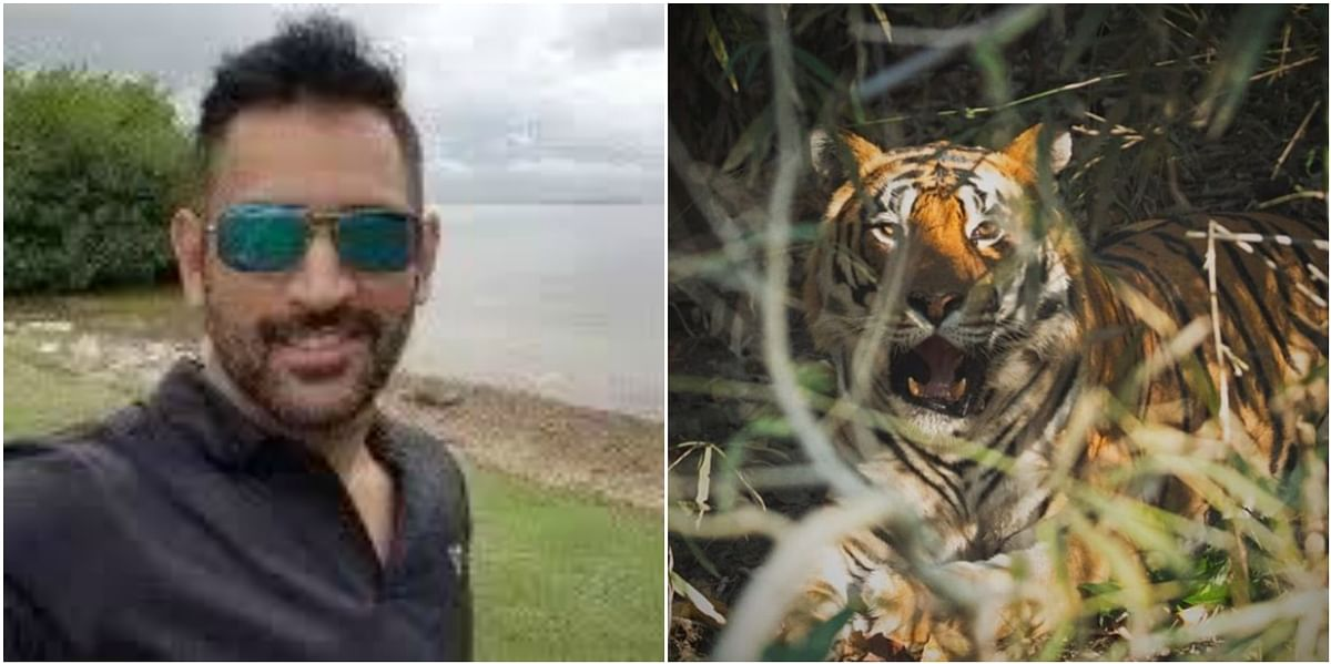 When MSD spotted a tiger: Thala shares a moment from his MP trip on social media