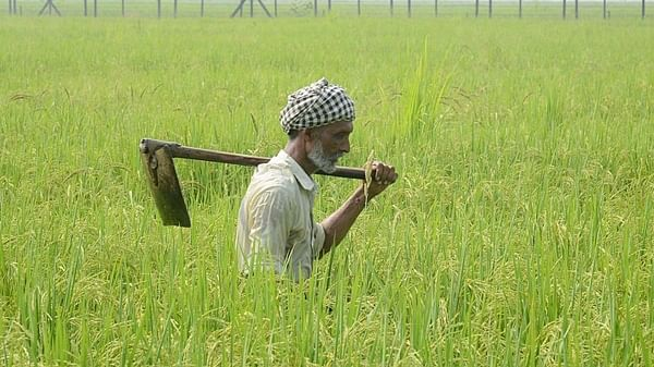 639 Maha farmer suicides in Mar-May
