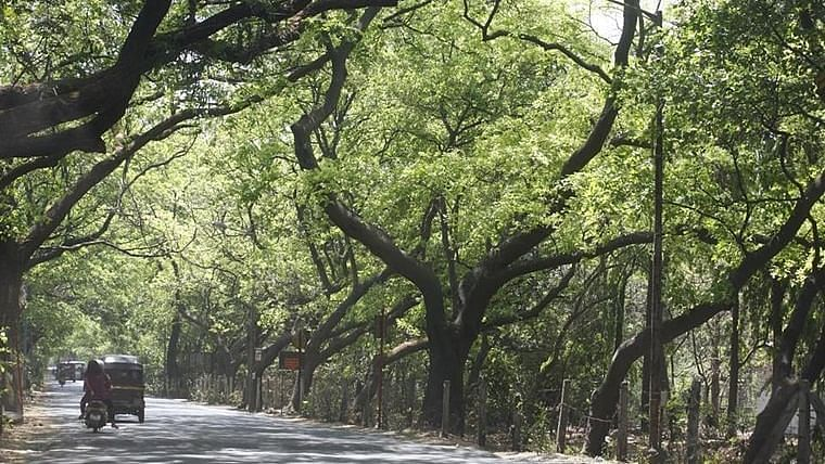 BMC to grow 4 lakh trees in Mumbai using Miyawaki