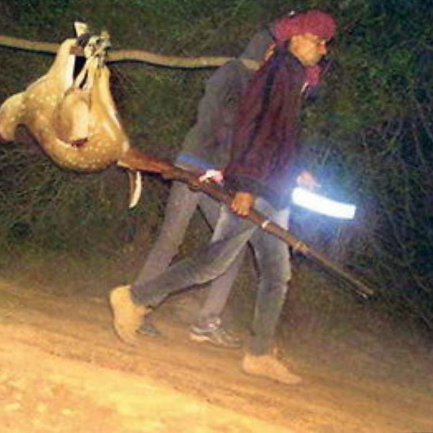 Poachers carry Ranthambhore chital deer, picture goes viral
