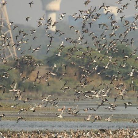 Scrap flood-causing special economic zone, demand fishermen