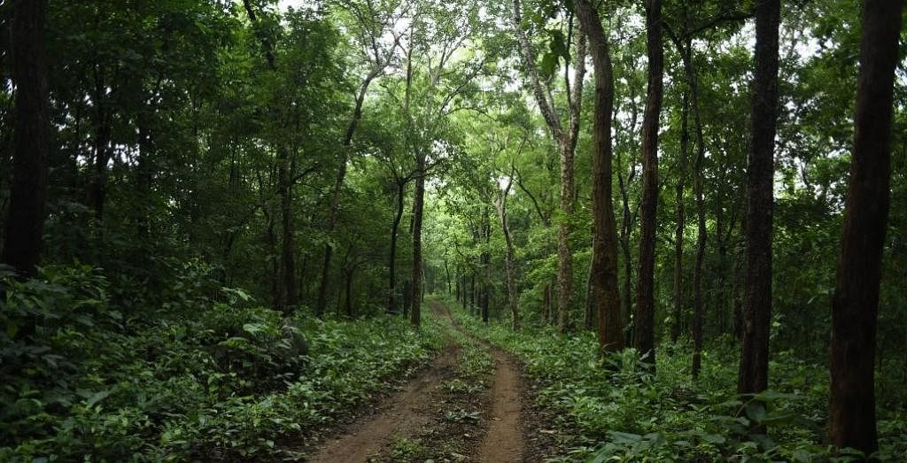 Corona Impact: Green cover improves, sapling survival rate up, says MP forest department