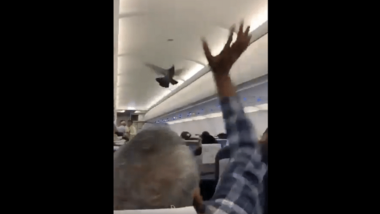 'Kabutar ja ja ja': Chaos on GoAir plane as stowaway pigeon delays flight by 30 minutes