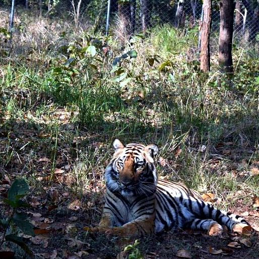 Bhopal: Van Vihar 27 big cats, animal count rises to 1485