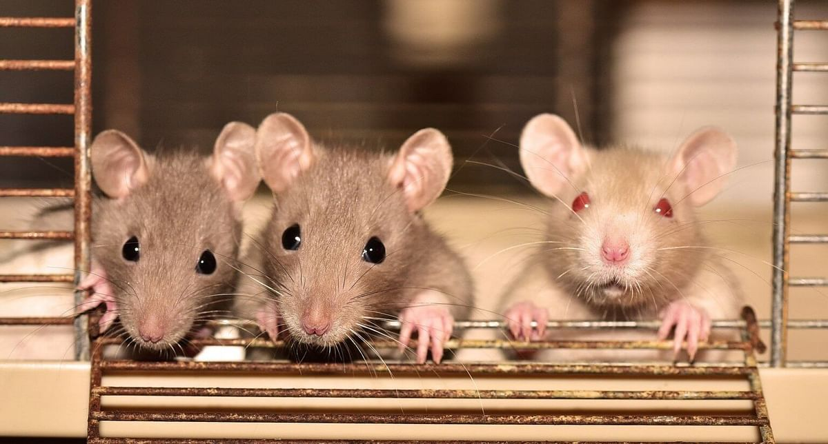 After COVID-19 is the world ready for Hantavirus?