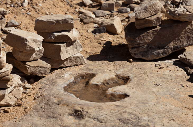 Dinosaur footprints reveal clues about ecosystem
