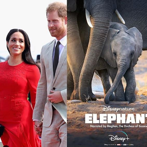 Meghan Markle back to showbiz as narrator of Disneynature documentary 'Elephants'