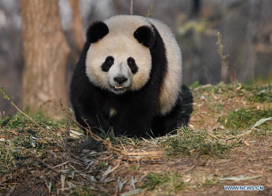 China's endangered wildlife recovers