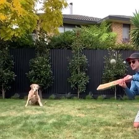 Watch: Kane Williamson giving his dog some catching practice during quarantine period