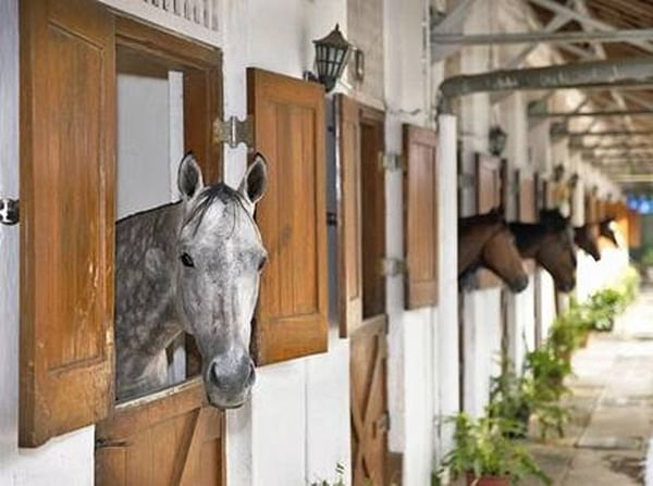 Stable set-up for equines, grooms in lockdown at Mahalaxmi