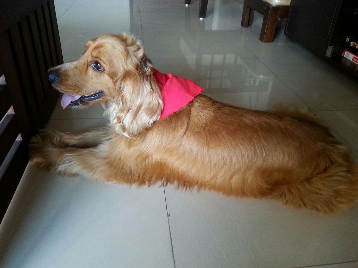Navi Mumbai police slammed after pet dog dies of cardiac arrest amid coronavirus lockdown