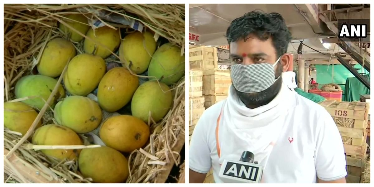 Mango farmers, wholesale dealers face huge losses in Maharashtra amid coronavirus lockdown