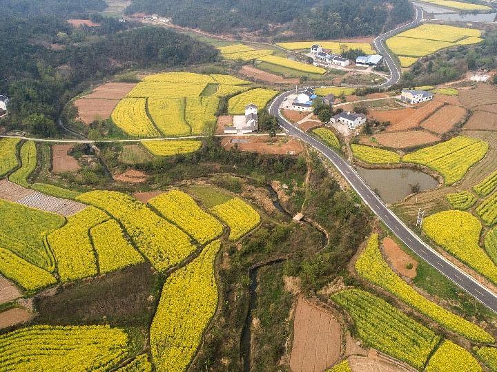 Hubei's farm produce gets rural cooperatives' thrust
