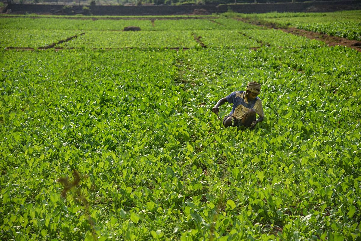 Madhya Pradesh: Crops on up to 50 hectares to be covered in PMFBY, says minister Kamal Patel