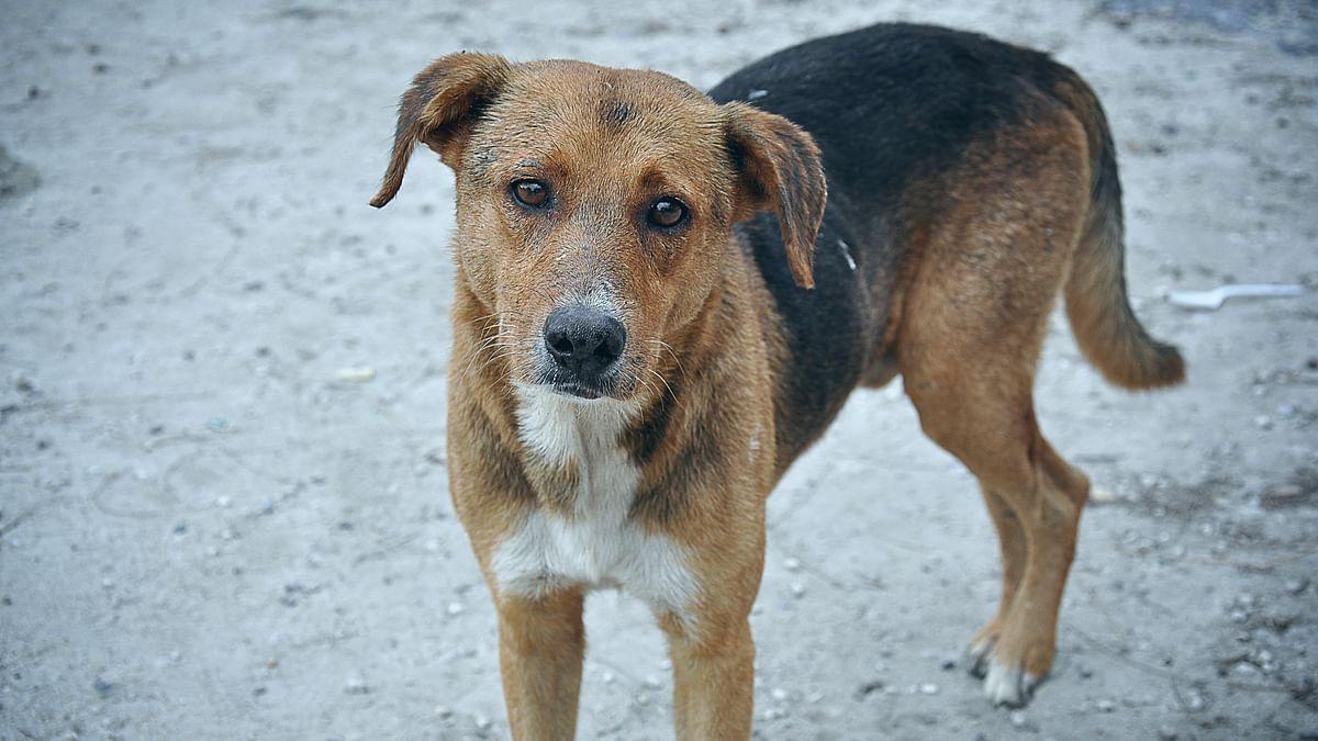 Indore: Man pulls trigger, shoots dog