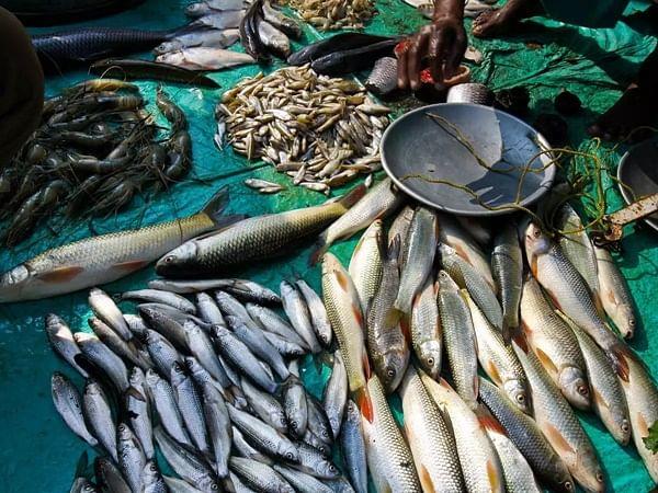 Coronavirus in Mumbai: Maha govt to focus on exporting fish, streamlining markets