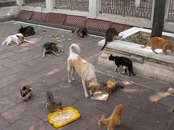 Coronavirus in Mumbai: Volunteers step in to feed 'bezubaan' strays & birds