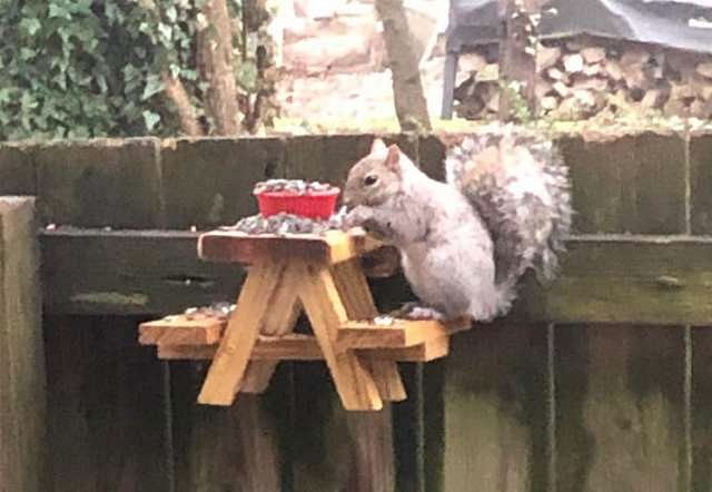 US man gives squirrels treat during self-isolation days