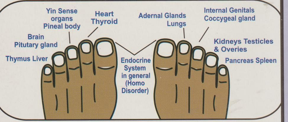 Just like nails, toenails too are associated with particular organs/ glands.