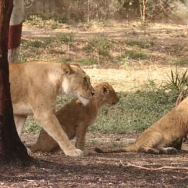 Indore: City zoo reopens, sees minimal footfall amid coronavirus crisis