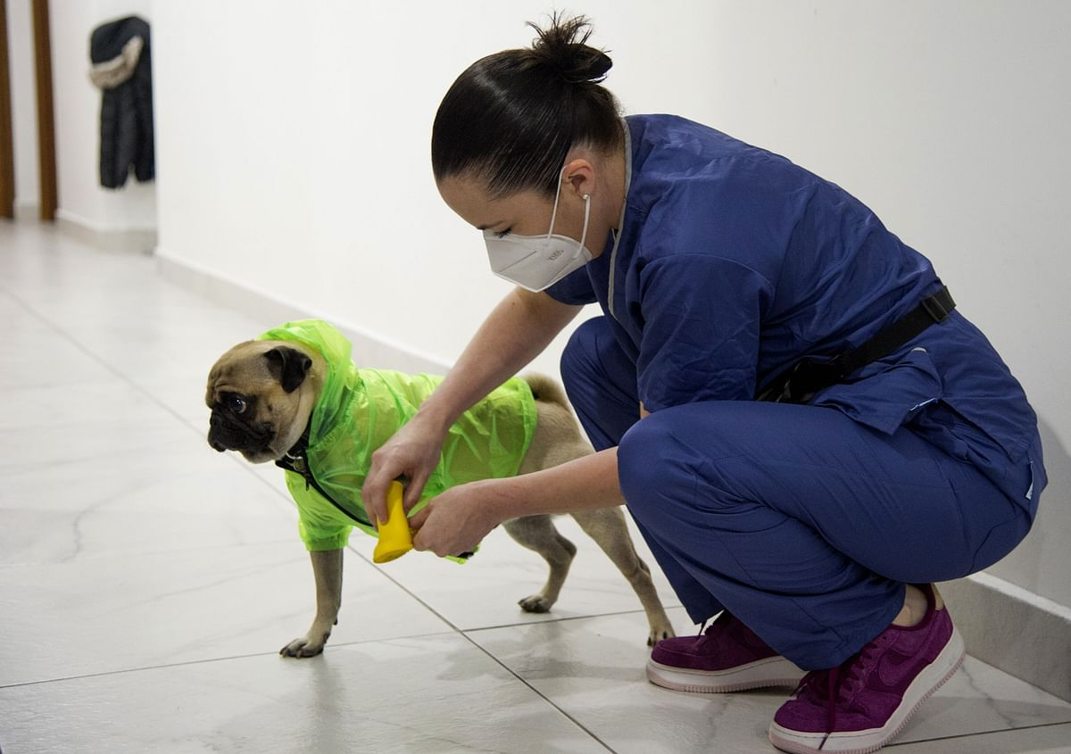 UK begins trial to see if pooches can sniff out deadly coronavirus