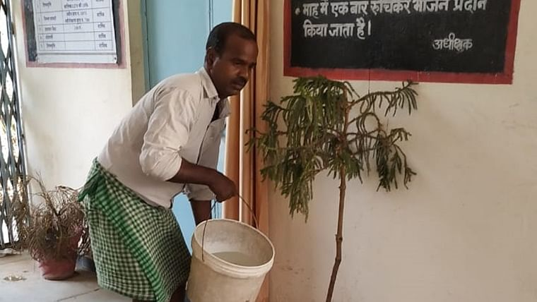 How man stuck in Khandwa helped give some plants a new lease of life