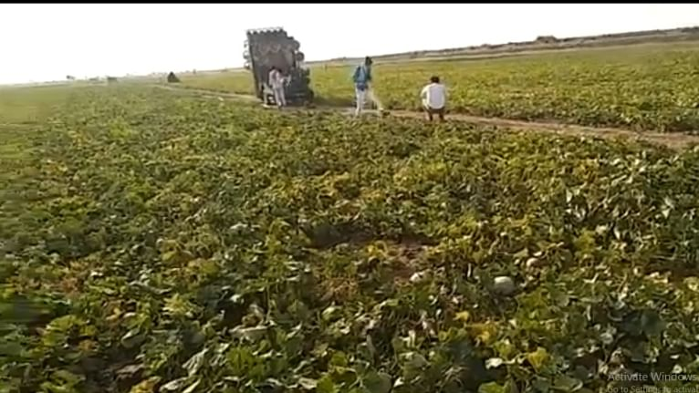 Madhya Pradesh: Farmer allegedly commits suicide suffering soybean crop loss due to incessant rainfall