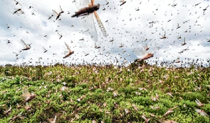 Madhya Pradesh: Police sirens being used to scare away locust swarms in Panna