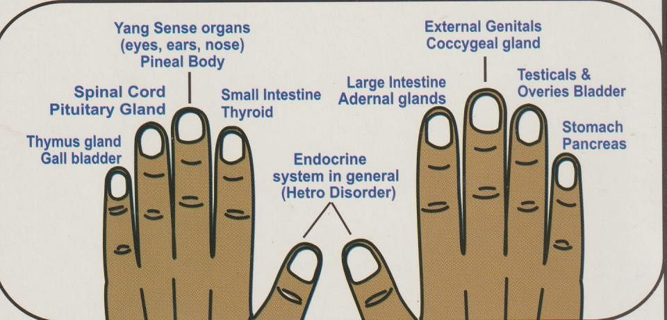 The diagram shows how each nail is connected to a specific organ/ glands.