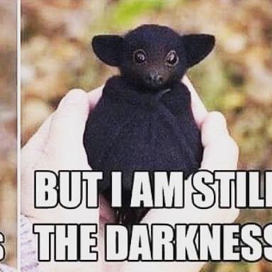 Shruti Haasan shares 'creepy yet cute' COVID-19 meme, says 'bat haters - bats are not the problem'